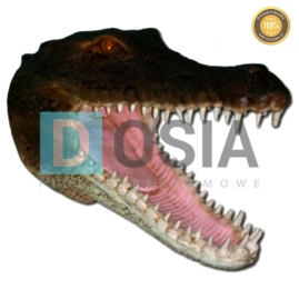 ZW20 - Krokodyl figura reklamowa,dekoracyjna